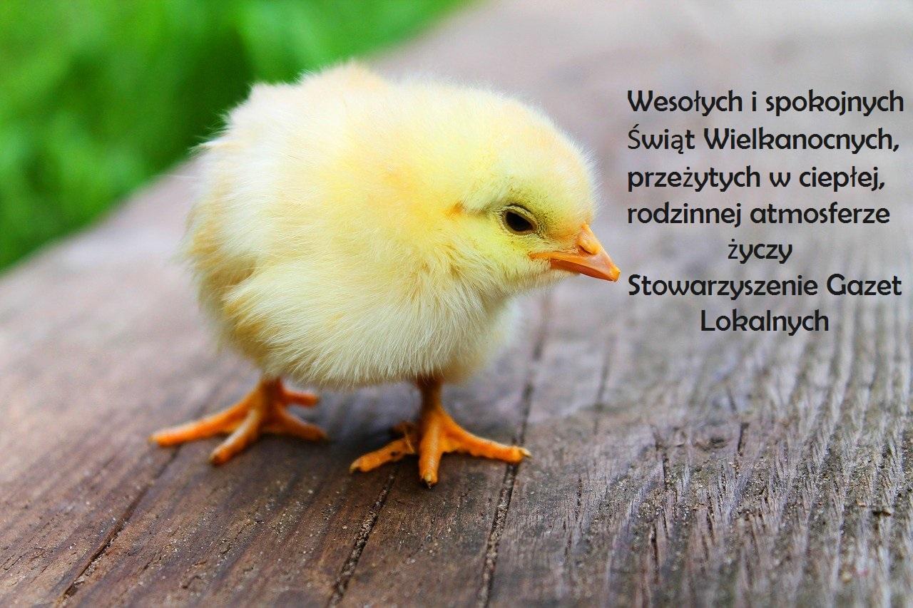 bird-349026_1280